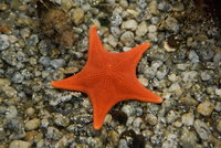 High angle view of a starfish in the sea