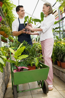 Planter giving a plant to a customer in a greenhouse 20025341948| 写真素材・ストックフォト・画像・イラスト素材|アマナイメージズ