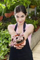 Woman holding a potted plant in a greenhouse 20025342120| 写真素材・ストックフォト・画像・イラスト素材|アマナイメージズ