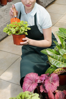 Woman holding a potted plant in a greenhouse 20025342137| 写真素材・ストックフォト・画像・イラスト素材|アマナイメージズ