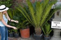 Customer buying potted plants 20025342181  写真素材・ストックフォト・画像・イラスト素材 アマナイメージズ