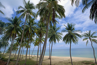 Palm trees and deserted beach on the south side of Phu Quoc island in south west Vietnam, Indochina, Southeast Asia, Asia