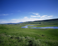 The Hayden Valley, Yellowstone National Park, UNESCO World Heritage Site, Wyoming, United States of America, North America