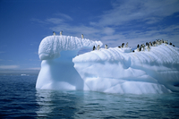 Adelie penguins on icebergs, Antarctica, Polar Regions