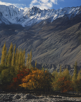 Trees in autumn colours and mountains at Khaplu in Baltistan, Pakistan, Asia