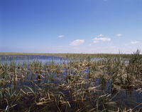 Swamps, Everglades National Park, UNESCO World Heritage Site, Florida, United States of America, North America