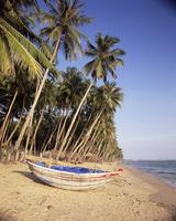 Small boat on palm fringed beach, Mui Ne beach, south-central coast, Vietnam, Indochina, Southeast Asia, Asia