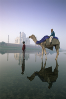 Camel in front of the Taj Mahal and Yamuna (Jumna) River, Taj Mahal, UNESCO World Heritage Site, Agra, Uttar Pradesh state, Indi 20025347831| 写真素材・ストックフォト・画像・イラスト素材|アマナイメージズ