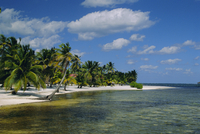 Main dive site in Belize, Ambergris Caye, Belize, Central America