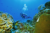 Underwater diver and corals, Cozumel Island, Mexico