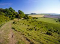 The Ridgeway Path between Steps Hill and Pitstone Hill, Chilterns, Buckinghamshire, England, United Kingdom, Europe
