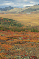 Autumnal hues in landscape of the Richardson Mountains, Yukon, Canada