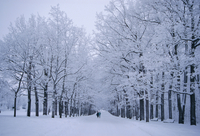 Catherine's Park in February, Tsarske Seloe (Puskin), St. Petersburg, Russia 20025348050| 写真素材・ストックフォト・画像・イラスト素材|アマナイメージズ