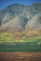 Tundra, Broad Pass, Denali National Park, Alaska Range, Alaska, United States of America, North America