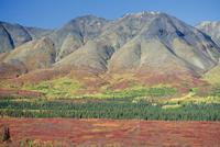 Autumn tundra landscape, Broad Pass, Denali National Park, Alaska, United States of America