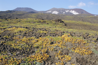 Gorely volcano, tundra plants on slopes, summit crater rims on skyline, Kamchatka, East Siberia, Russia