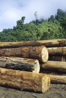 Logging in the rain forest, hardwood awaiting river transport, Limbang River, Sarawak, island of Borneo, Malaysia