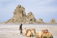 Tufa towers at Lac Abhe (Abbe), formed by hot springs beneath old lake at higher level, Afar Triangle, Djibouti, Africa