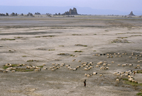 Lac Abhe (Abbe) in wide rift valley, tufa towers, relics from old lake at higher level, Afar Triangle, Djibouti, Ethiopia