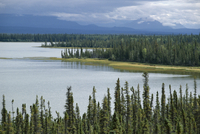 Muskeg, tundra wetland, with lakes and pine forest, Glenallen, Alaska, United States of America (U.S.A.), North America