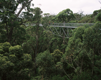 Treetop walk, Valley of the Giants, Walpole, Western Australia, Australia, Pacific