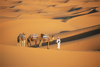 Camel guide and camels, rolling sand dunes of the Erg Chebbi dune sea, Sahara Desert, near Merzouga, Morocco, North Africa, Afri 20025348283| 写真素材・ストックフォト・画像・イラスト素材|アマナイメージズ