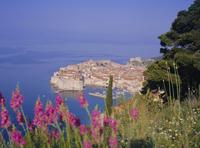 Walled city of Dubrovnik, Croatia, Europe