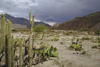 Altiplano, Bolivia, South America