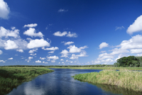 View from riverbank of white clouds and blue sky, Myakka River State Park, near Sarasota, Florida, United States of America (U.S