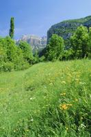 Field of spring flowers, near Torla, Huesca (Pyrennes), Aragon, Spain, Europe