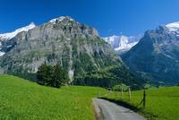View along path through fields to the Schreckhorn and Fiescherhorner, Grindelwald, Bern (Berne), Bernese Oberland, Swiss Alps, S