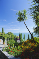 Tropical gardens, Mainau Island, Lake Constance, Baden-Wurttemberg, Germany, Europe