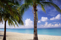 Palm trees, beach and still turquoise sea, Seven Mile beach, Grand Cayman, Cayman Islands, West Indies, Central America