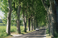 Car on typical tree lined country road, near Pezenas, Herault, Languedoc-Roussillon, France, Europe