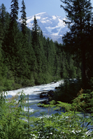 Canyon of the Fraser River, Mount Robson Provincial Park, UNESCO World Heritage Site, British Columbia (B.C.), Canada, North Ame