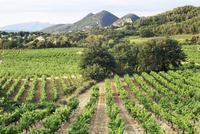 View to distant village across vineyards, Seguret, Vaucluse, Provence, France, Europe