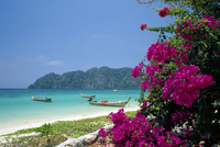 Boats moored off beach of Phi Phi Don Island, off Phuket, Thailand