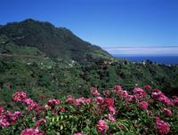 Landscape near Sao Roque do Faial, island of Madeira, Portugal, Atlantic, Europe