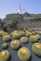 Jardin de Cactus, near Guatiza, Lanzarote, Canary Islands, Atlantic, Spain, Europe