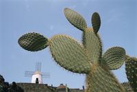 Jardin de Cactus near Guatiza, Lanzarote, Canary Islands, Spain, Europe
