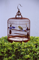 Bird in a cage, Yuen Po Bird Garden, Mong Kok, Kowloon, Hong Kong, China, Asia