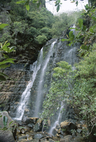 Beauchamp Falls, Blue Mountains National Park, UNESCO World Heritage Site, near Blackheath, New South Wales (N.S.W.), Australia,