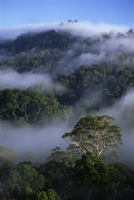 Aerial view of the canopy of virgin dipterocarp rainforest, Danum Valley Conservation Area, Sabah, Malaysia, island of Borneo, S