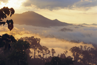Dawn in the Danum Valley Conservation Area - Dipterocarp rainforest, Mt Rafflesia in distance, Sabah, Malaysia, Asia