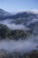Dawn mists in virgin dipterocarp rainforest, tallest in the world, Danum Valley, Sabah, island of Borneo, Malaysia, Southeast As