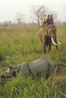 Tourists on elephant back sighting rhino, Chitwan National Park, Nepal