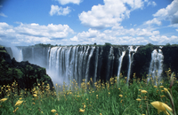 Flowers in bloom with the Victoria Falls behind, UNESCO World Heritage Site, Zambia, Africa