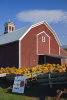 Pumpkins for sale in front of a red barn, Vermont, New England, United States of America