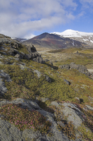 Moss covered lava beds surround Snaefellsjokull, an active strato volcano capped in snow and ice, on the Snaefellsnes Peninsula,