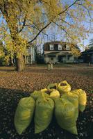 Bags of fallen autumn leaves, Toronto, Ontario, Canada, North America